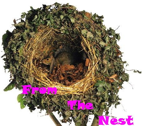 What does the inside of a squirrels nest look like