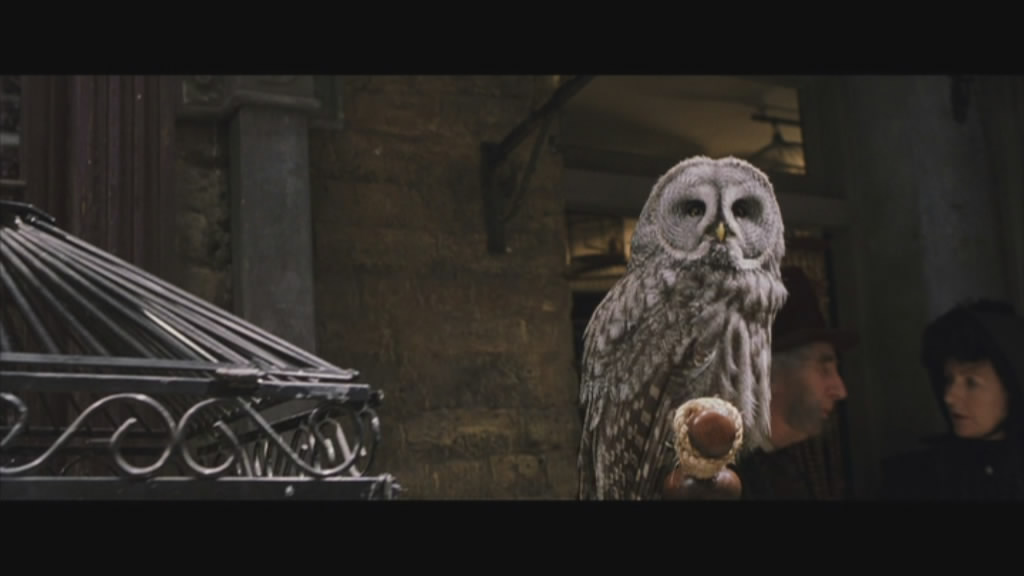 The owl knew, one day, his time would come. Then he would have his revenge.