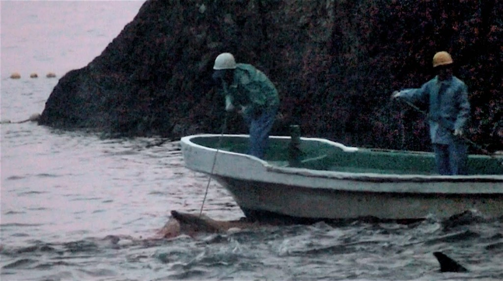 a personal reflection on the cove a documentary by louie psihoyos James cameron has teamed up louie psihoyos, director of the cove, and james wilks, a mma and ufc champion, to create a new vegan documentary.