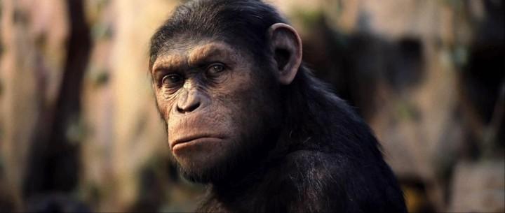 Apes-Old-Caesar
